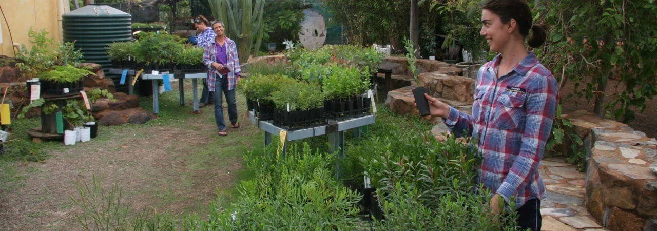 Plants Ready to Buy @ Drylands Permaculture Farm, Geraldton
