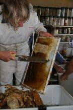 Honey Harvest Henni