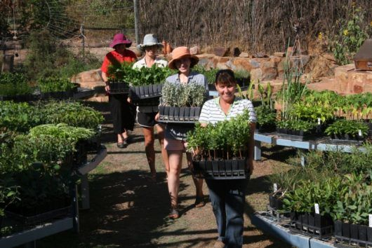 Spring Specials on Plants