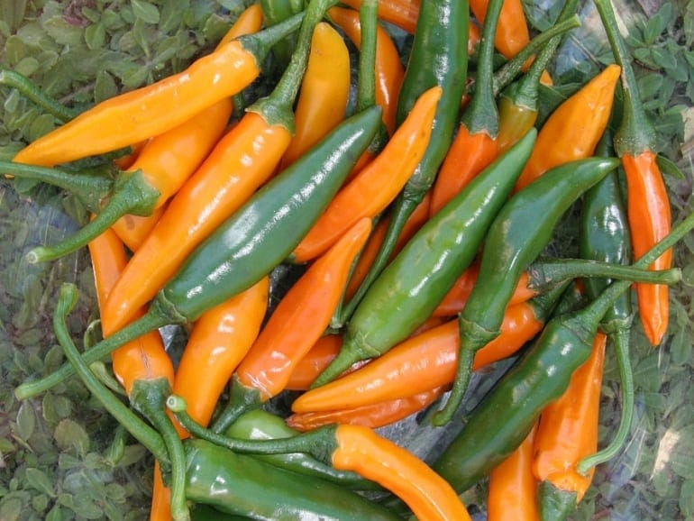 CHILLI – St Helena Orange