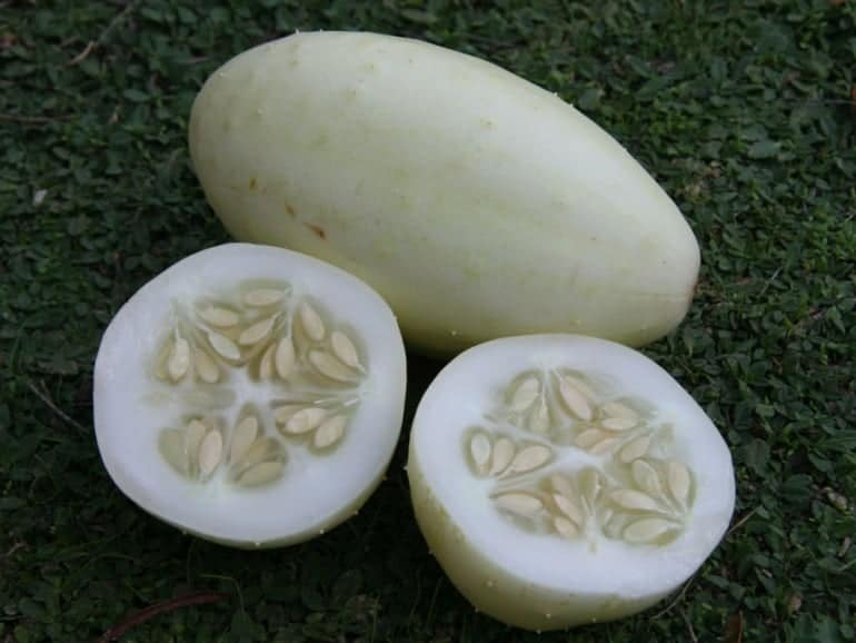 CUCUMBER – Dongara Long White Apple