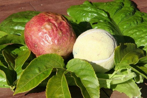 PASSIONFRUIT – Tennis Ball Pink