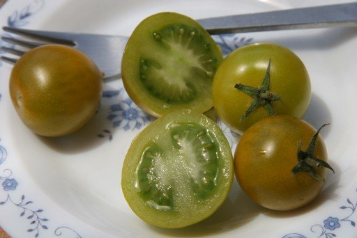 TOMATO – Thompson Green Grape