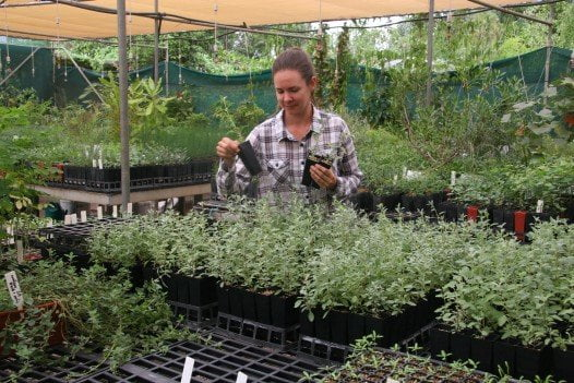 New Season Plants for Geraldton and our Midwest