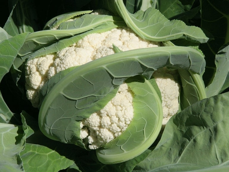 CAULIFLOWER- Snowball