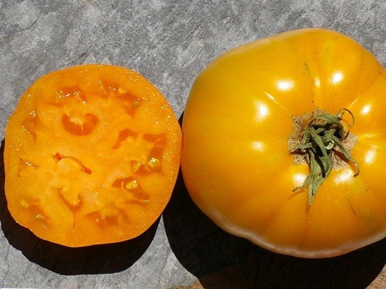 TOMATO – Verna Orange