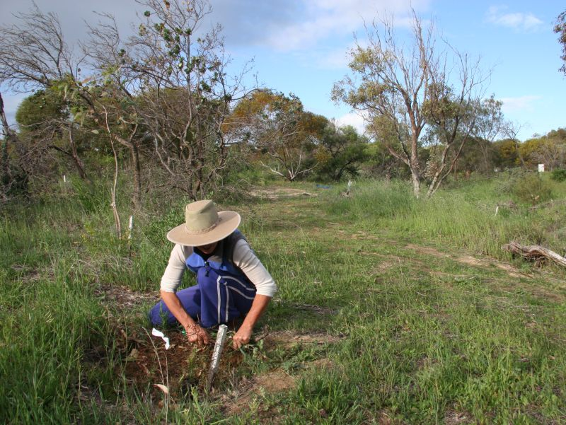 Creekline Revegetation